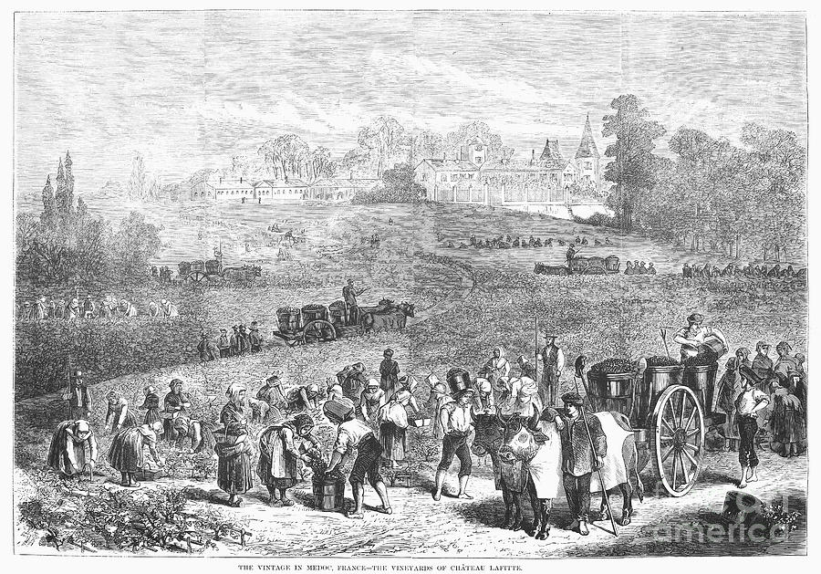France: Wine Harvest, 1871 Photograph