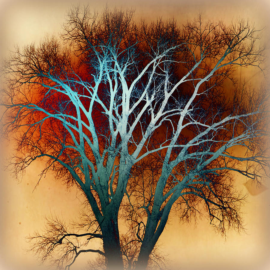 Freaky Tree 1 Photograph  - Freaky Tree 1 Fine Art Print
