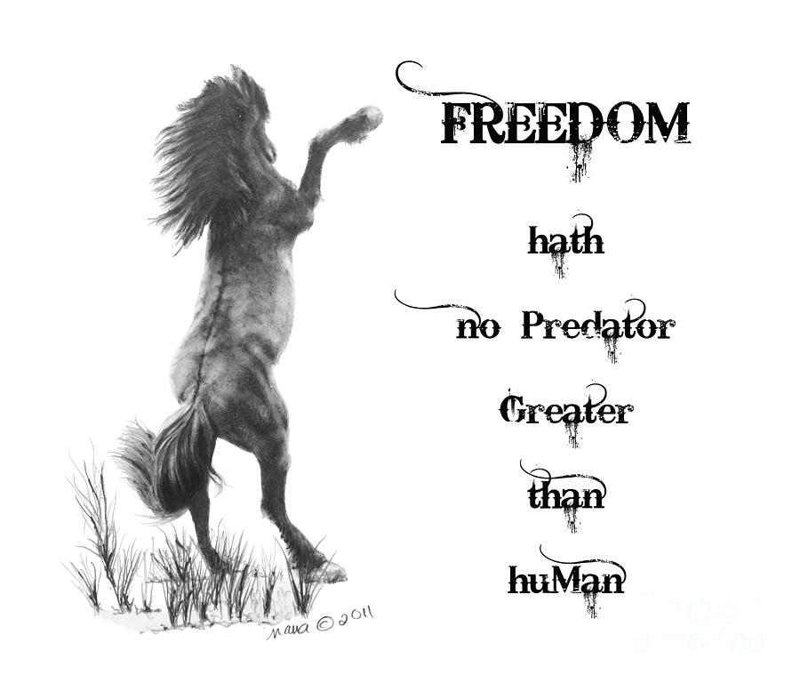 Freedom Drawing