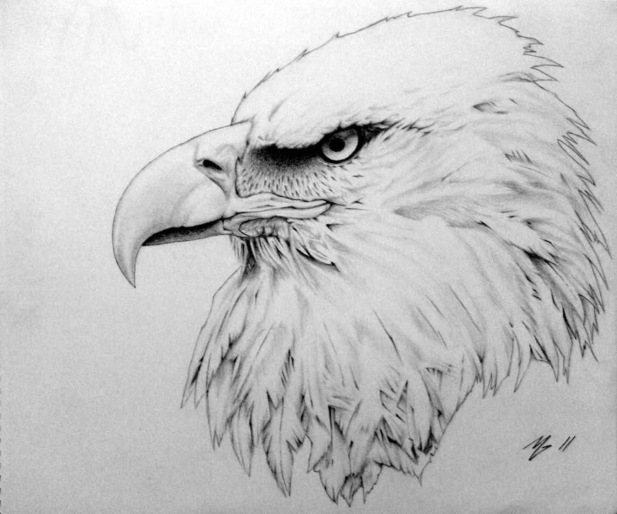 Freedom Drawing by Matt Greganti