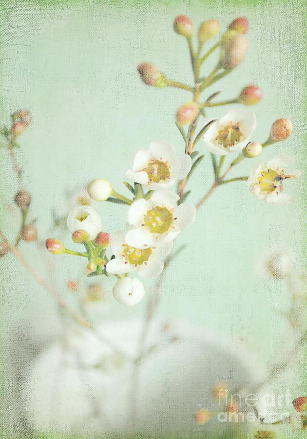 Freesia Blossom Photograph