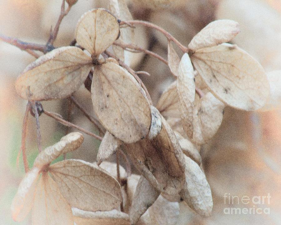 Freeze Dried Photograph
