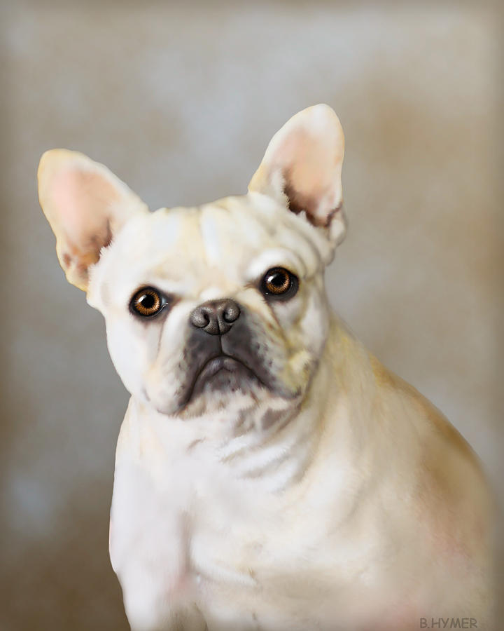 French Bulldog Painting - French Bulldog Luna by Barbara Hymer