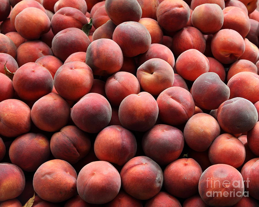 Fresh Peaches - 5d17816 Photograph  - Fresh Peaches - 5d17816 Fine Art Print