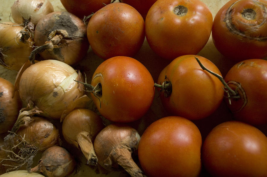 Fresh Tomatos And Onions From A Garden Photograph