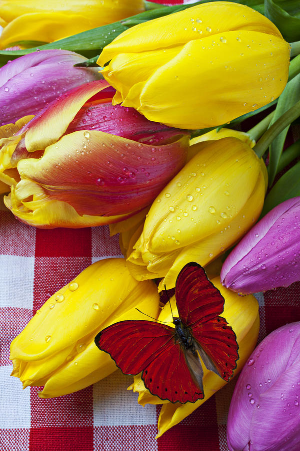 Fresh Tulips And Red Butterfly Photograph