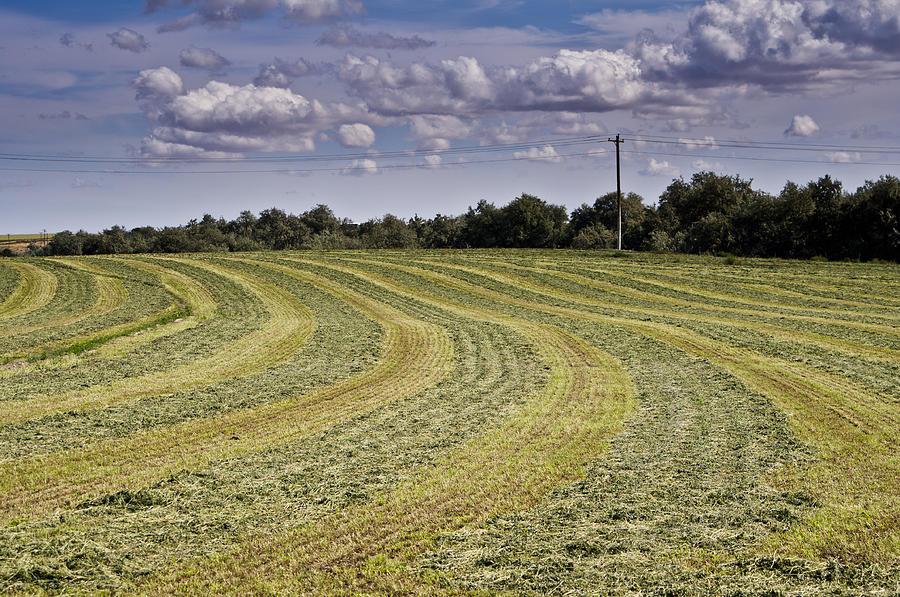 Freshly Mown Hay  Photograph