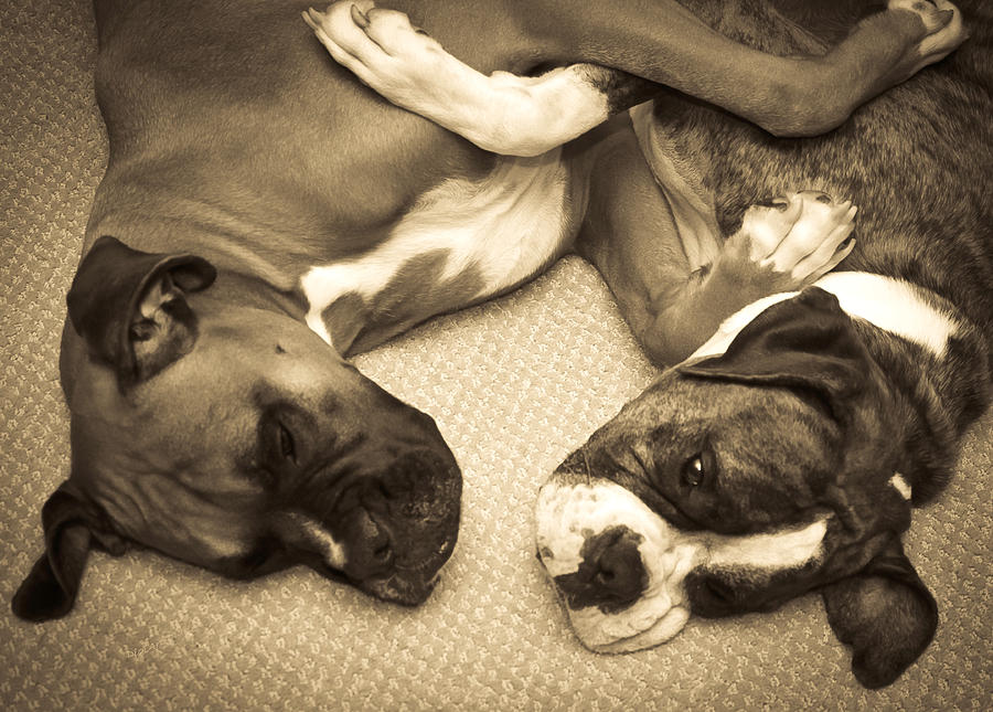 Boxers Photograph - Friendship Embrace by DigiArt Diaries by Vicky B Fuller