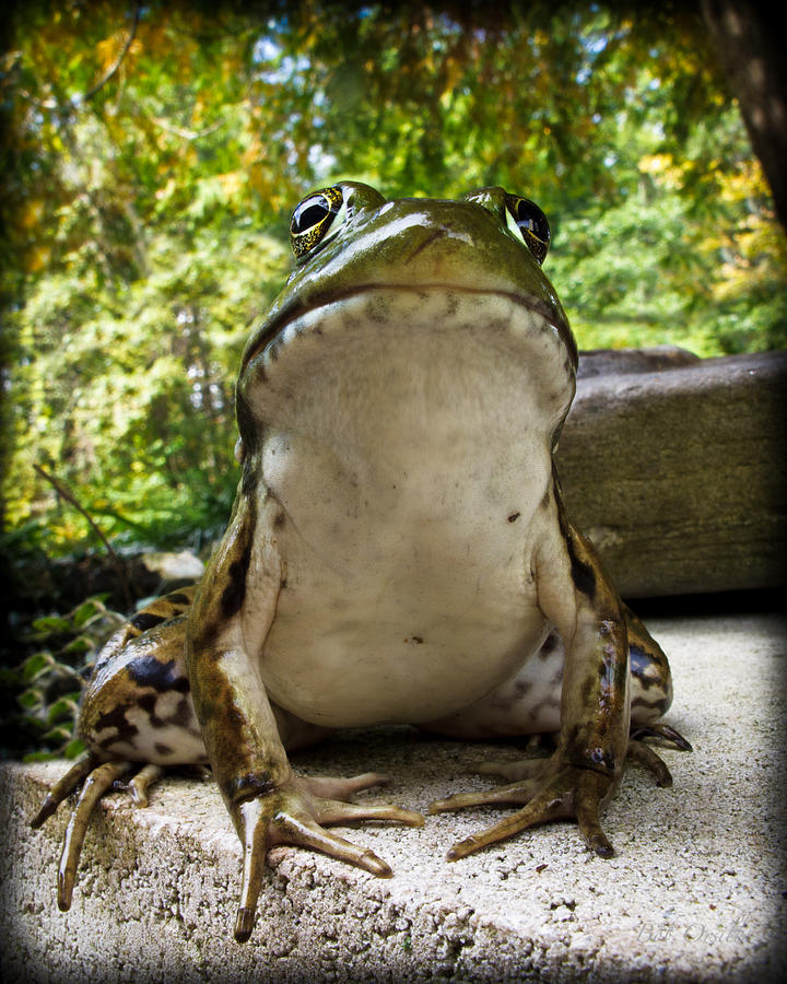 Frog Prince Or So He Thinks Photograph  - Frog Prince Or So He Thinks Fine Art Print