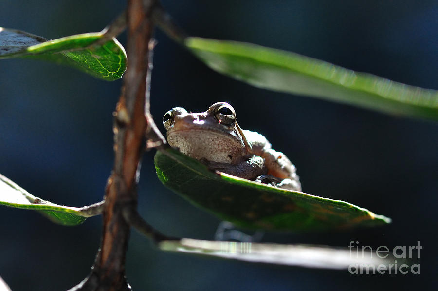 Frog With Twinkle In Eye Photograph  - Frog With Twinkle In Eye Fine Art Print