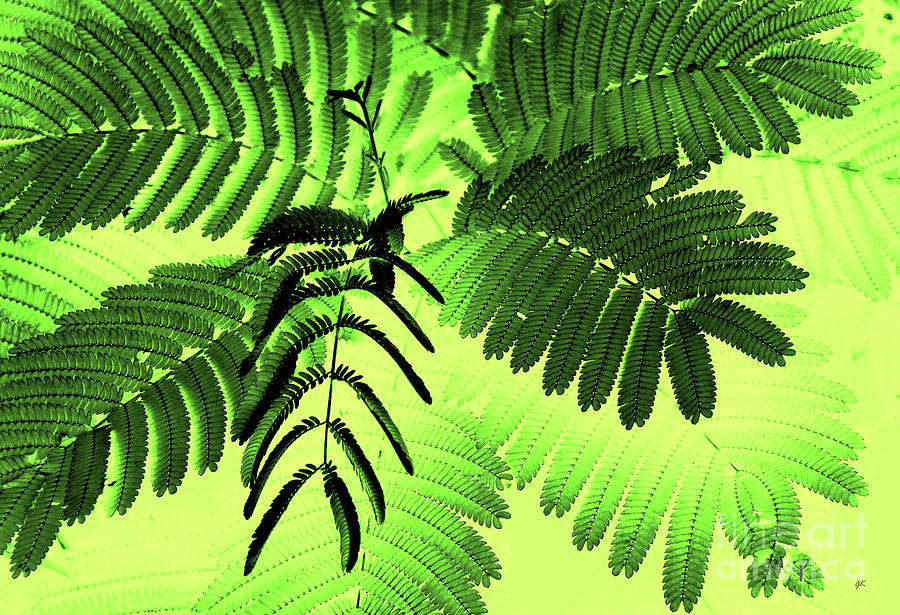 Fronds Photograph
