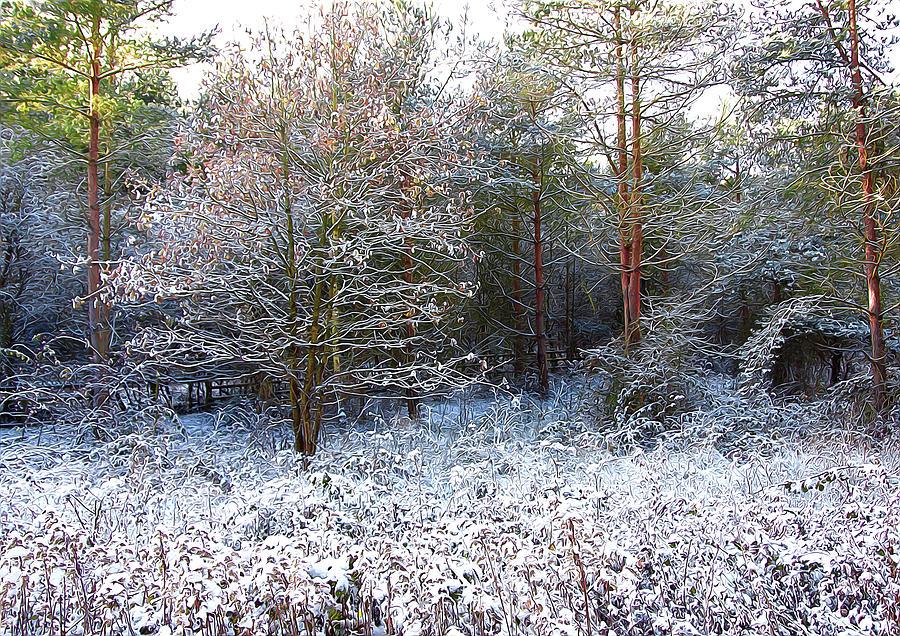 Frost Bite Photograph