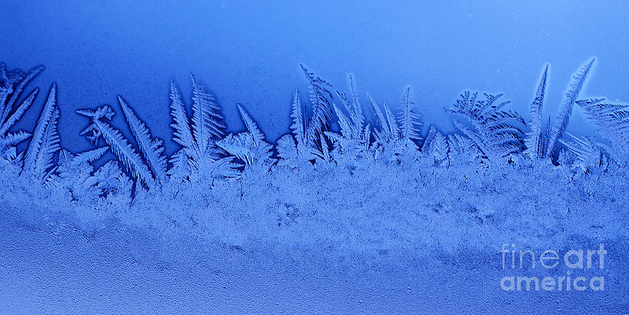 Frost Forest Photograph