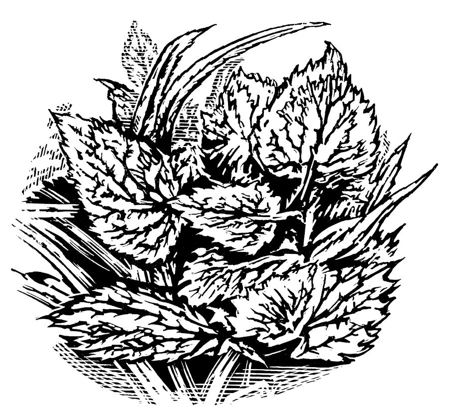 Frost On Leaves, Woodcut Photograph