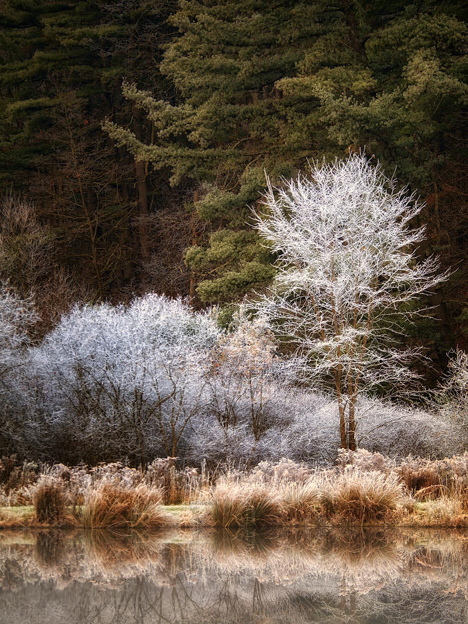 Frost Series No 4 Photograph