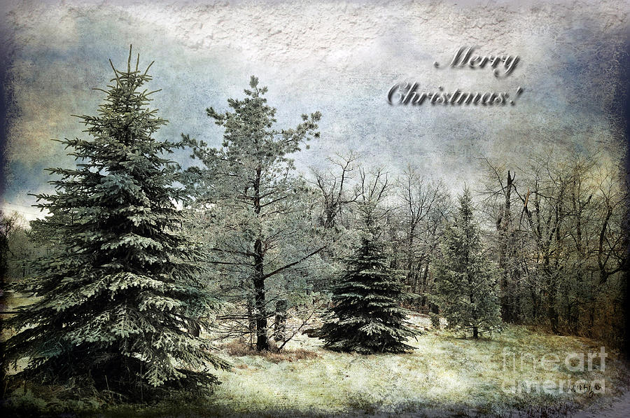 Frosty Christmas Card Photograph  - Frosty Christmas Card Fine Art Print