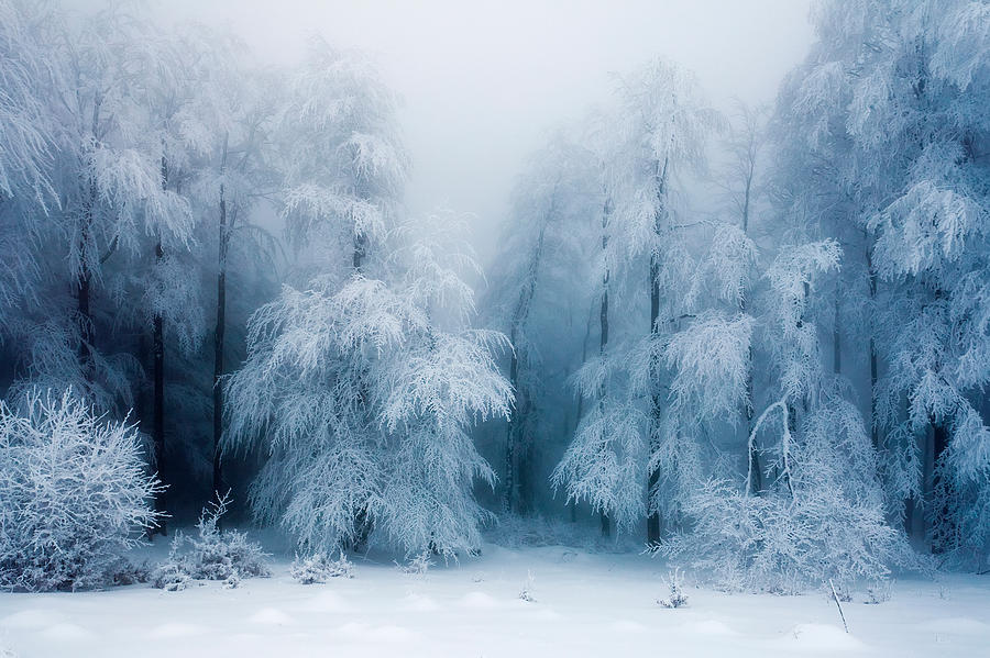 Frozen Forest Photograph
