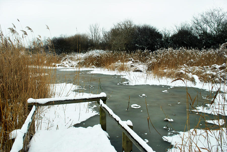 Frozen Marsh Photograph  - Frozen Marsh Fine Art Print