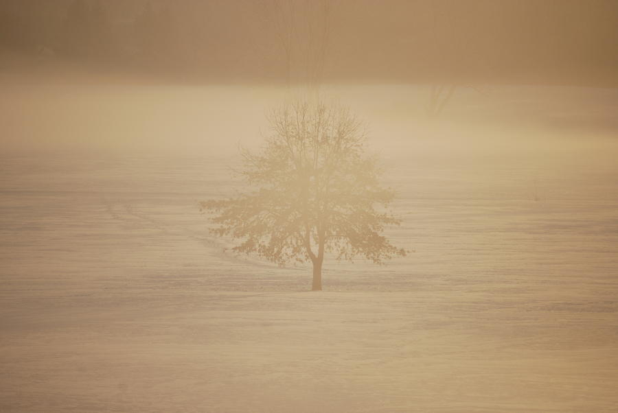 Frozen Natural Sepia Horizontal Photograph