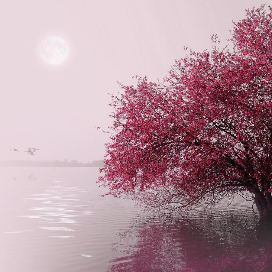 Full Moon On The Lake Photograph