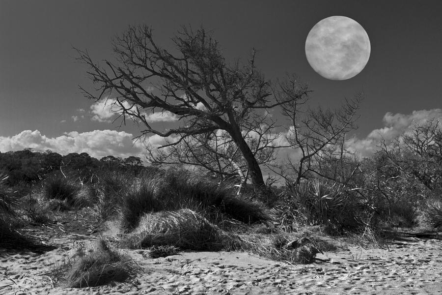 Full Moon Over Jekyll Photograph  - Full Moon Over Jekyll Fine Art Print