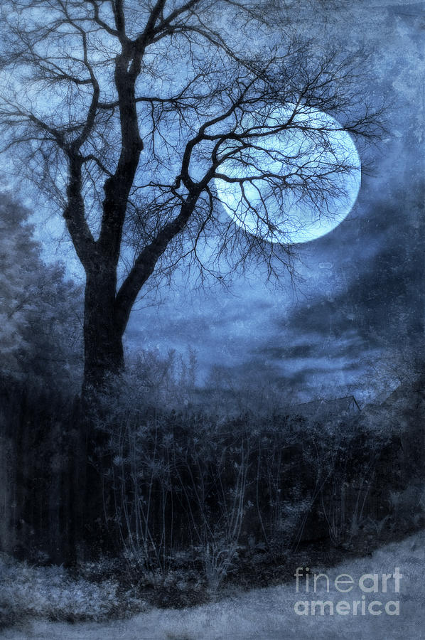 Full Moon Through Bare Trees Branches Photograph