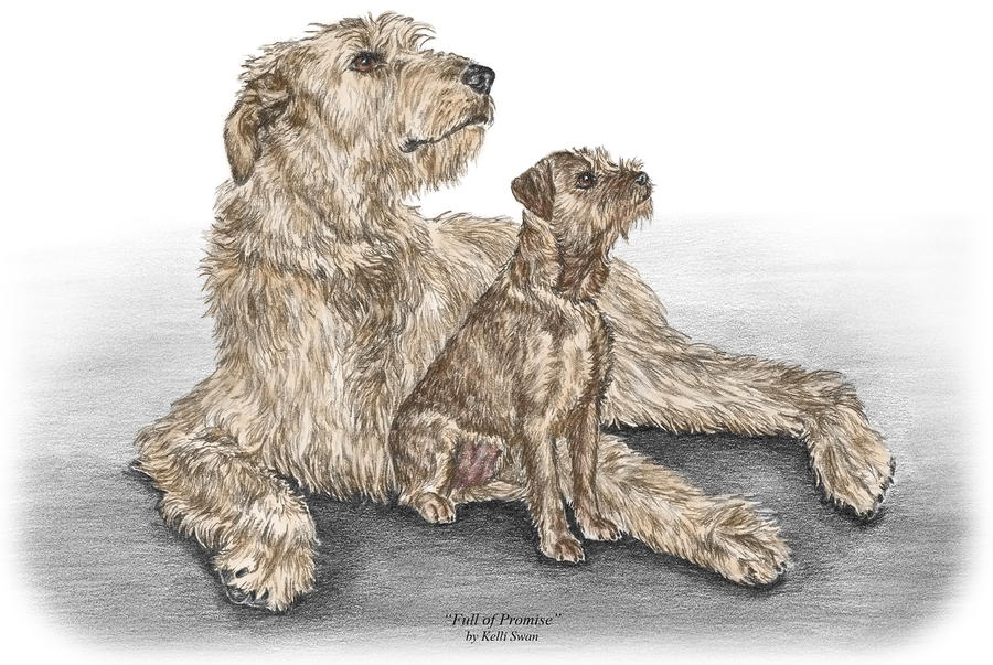 Full Of Promise - Irish Wolfhound Dog Print Color Tinted Drawing