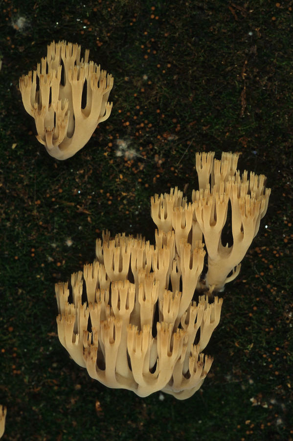 Fungi Grows Out Of A Fallen Log In An Photograph