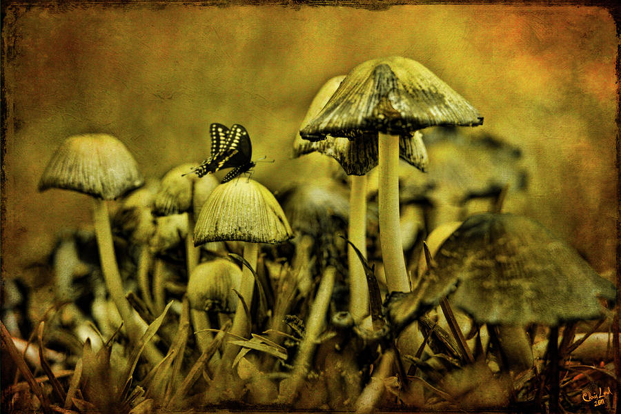 Mushroom Photograph - Fungus World by Chris Lord