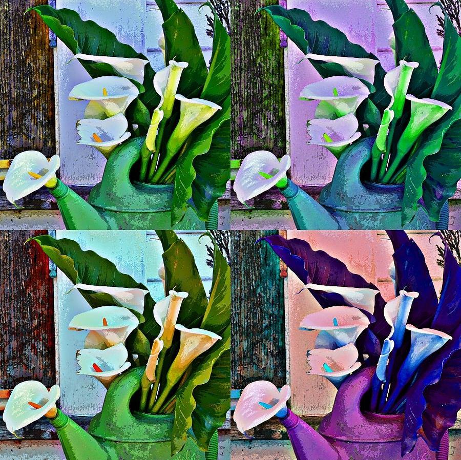 Funky Calla Lilies Photograph
