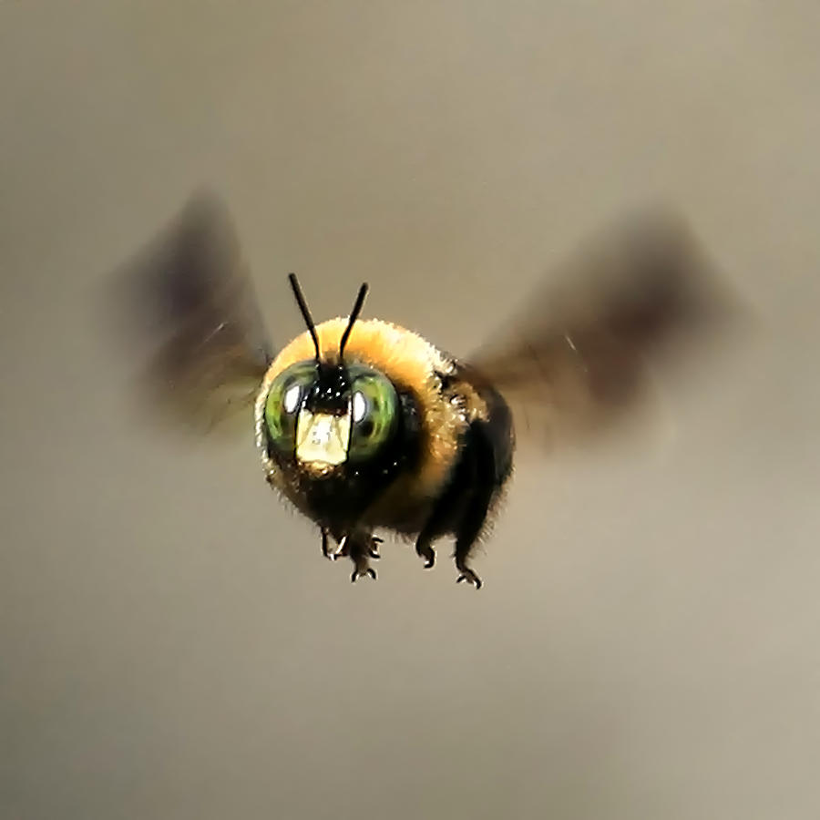 Funny Bumble Bee by Da...