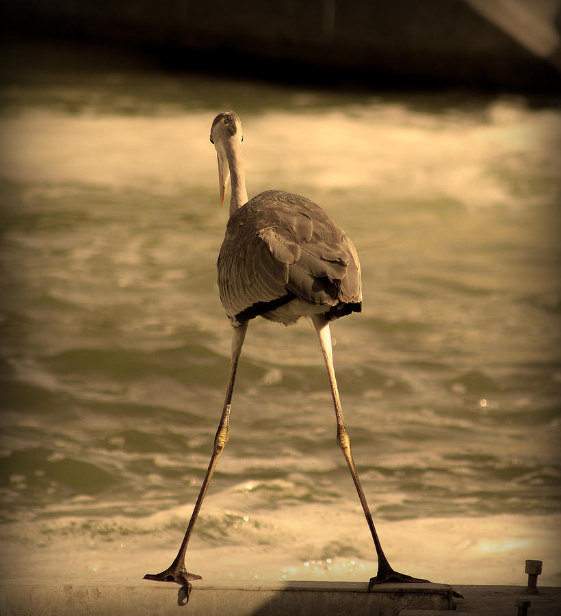 Funny Flamingo Photograph  - Funny Flamingo Fine Art Print