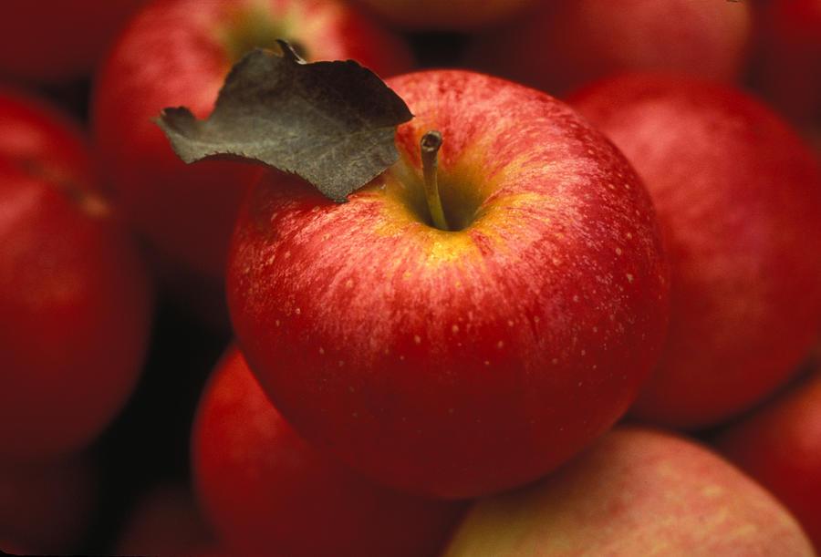 Gala Apples Photograph
