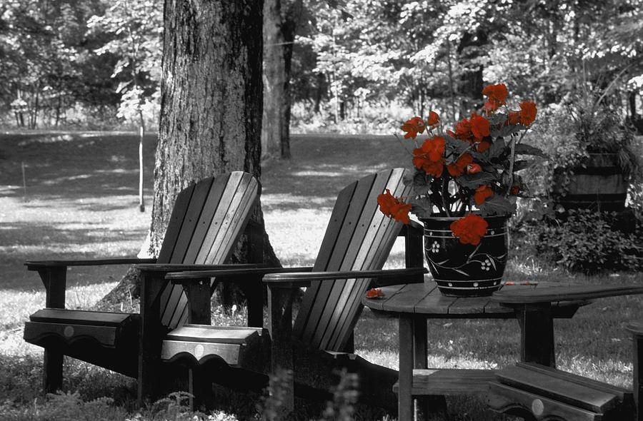Garden Chairs With Red Flowers In A Pot Photograph