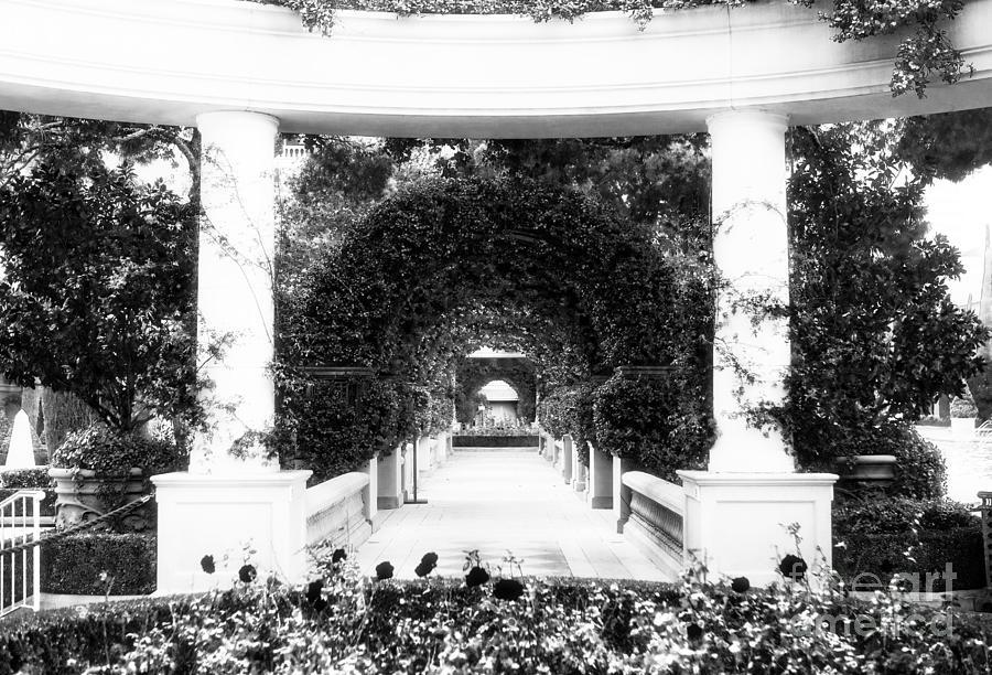 Garden Cirlces Photograph - Garden Circles by John Rizzuto
