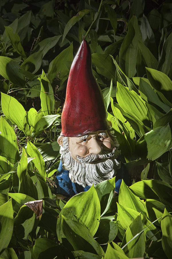 Garden Gnome No 0065 Photograph
