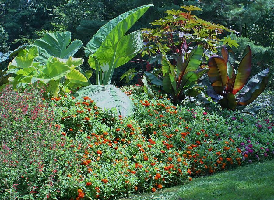 Garden Of Eden Photograph By Barbara S Nickerson