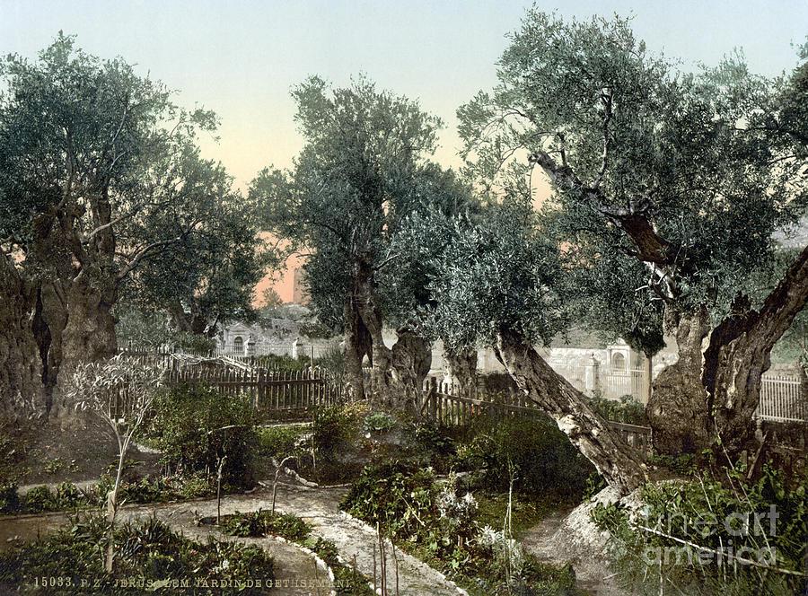 garden  gethsemane  granger