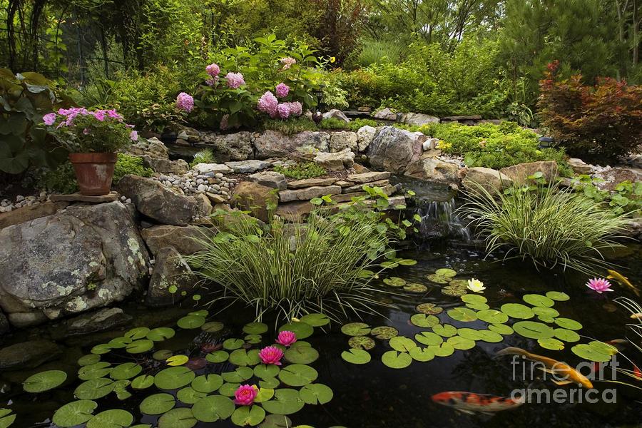 Garden Pond - D001133 Photograph