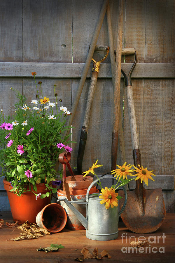 Garden Shed With Tools And Pots  Photograph