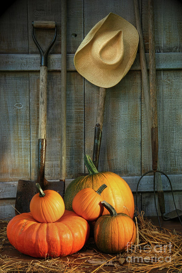 Garden Tools In Shed With Pumpkins Photograph