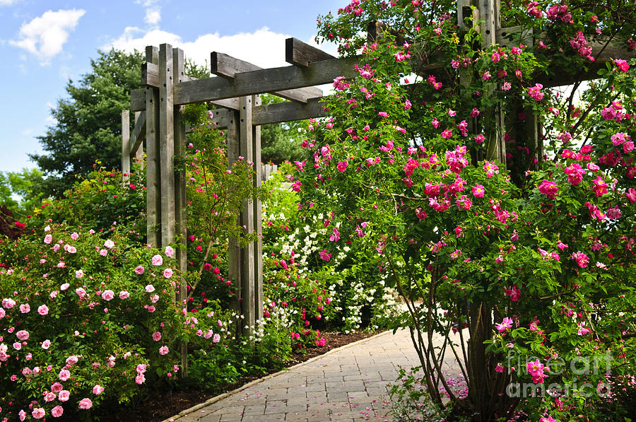 Garden With Roses Photograph