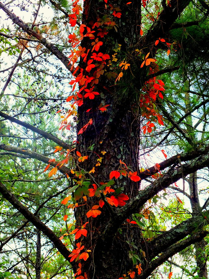 Autumn Photograph - Garland Of Autumn by Karen Wiles