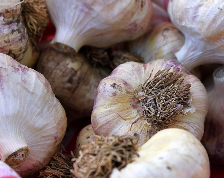 Garlic Photograph  - Garlic Fine Art Print