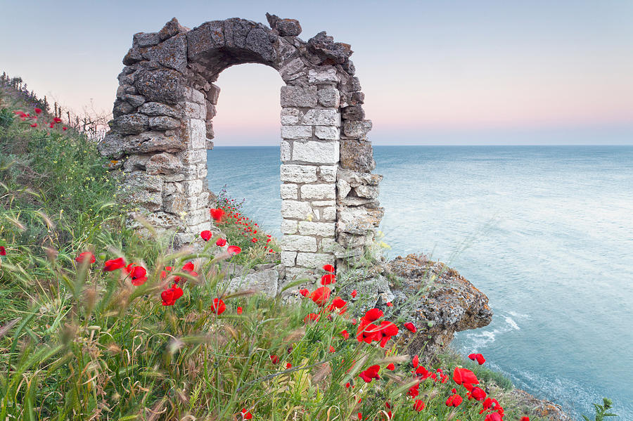 Gate In The Poppies Photograph