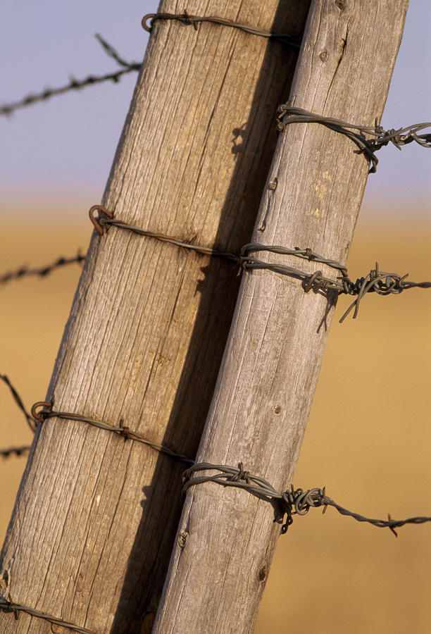 Gate Posts Join A Barbed Wire Fence Photograph  - Gate Posts Join A Barbed Wire Fence Fine Art Print