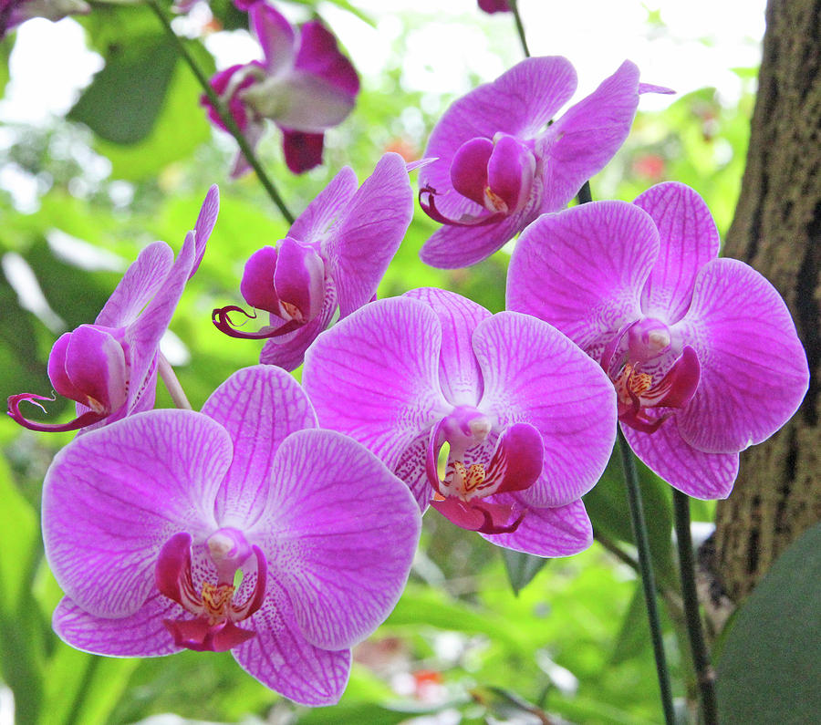 Becky Photograph - Gathering Of Orchids by Becky Lodes