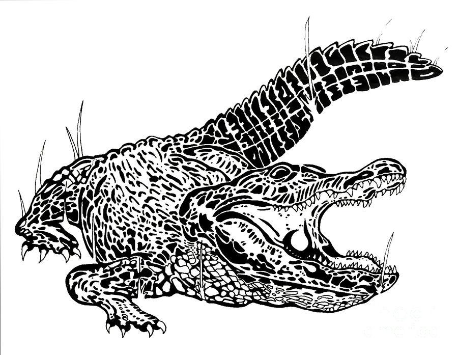 Gator Feed Drawing