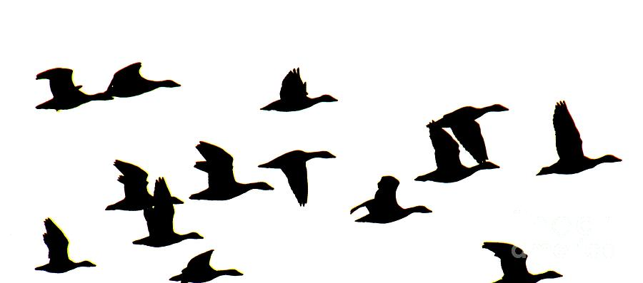 Flying Geese Silhouette Clip