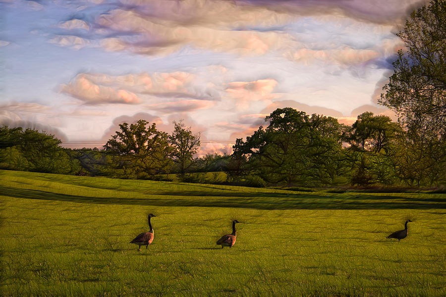 Geese On Painted Green Photograph  - Geese On Painted Green Fine Art Print